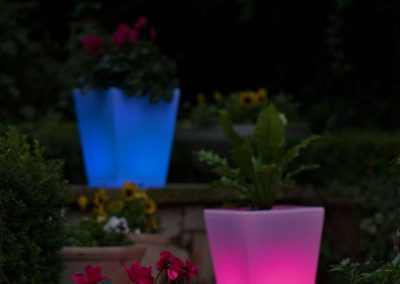 Glow In The Dark Gardens Gallery Image 21