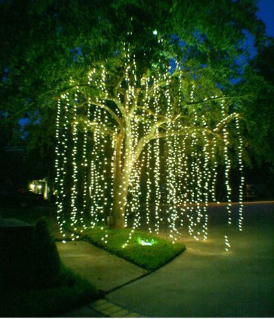 Glow In The Dark Gardens Gallery Image 29