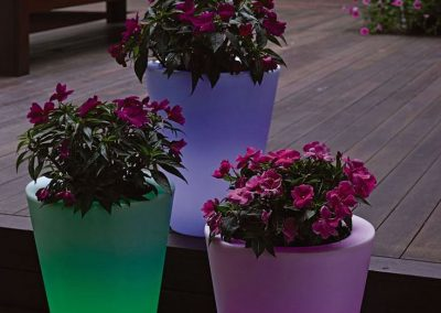 Glow In The Dark Gardens Gallery Image 9