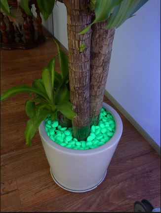 Glow In The Dark Gardens Gallery Image 22